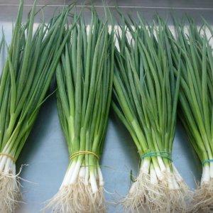 Зеленый лук – польза и вред для здоровья человека