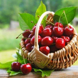 Польза вишни для здоровья: женщин, мужчин, детей. Листья вишни польза или вред. Польза свойства вишни: для женщин, детей, мужчин