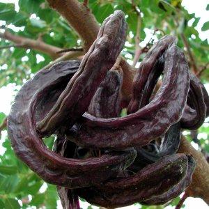 Экстракт плодов рожкового дерева