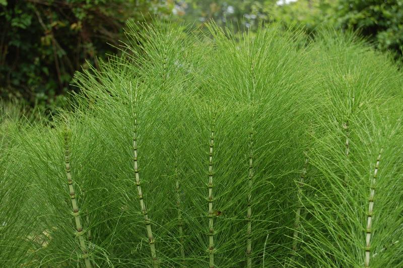 Какие травы нужно пить при заболевании Пиелонефрит